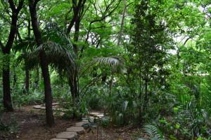 arboreto managua