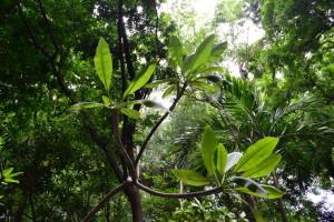 arboretum managua